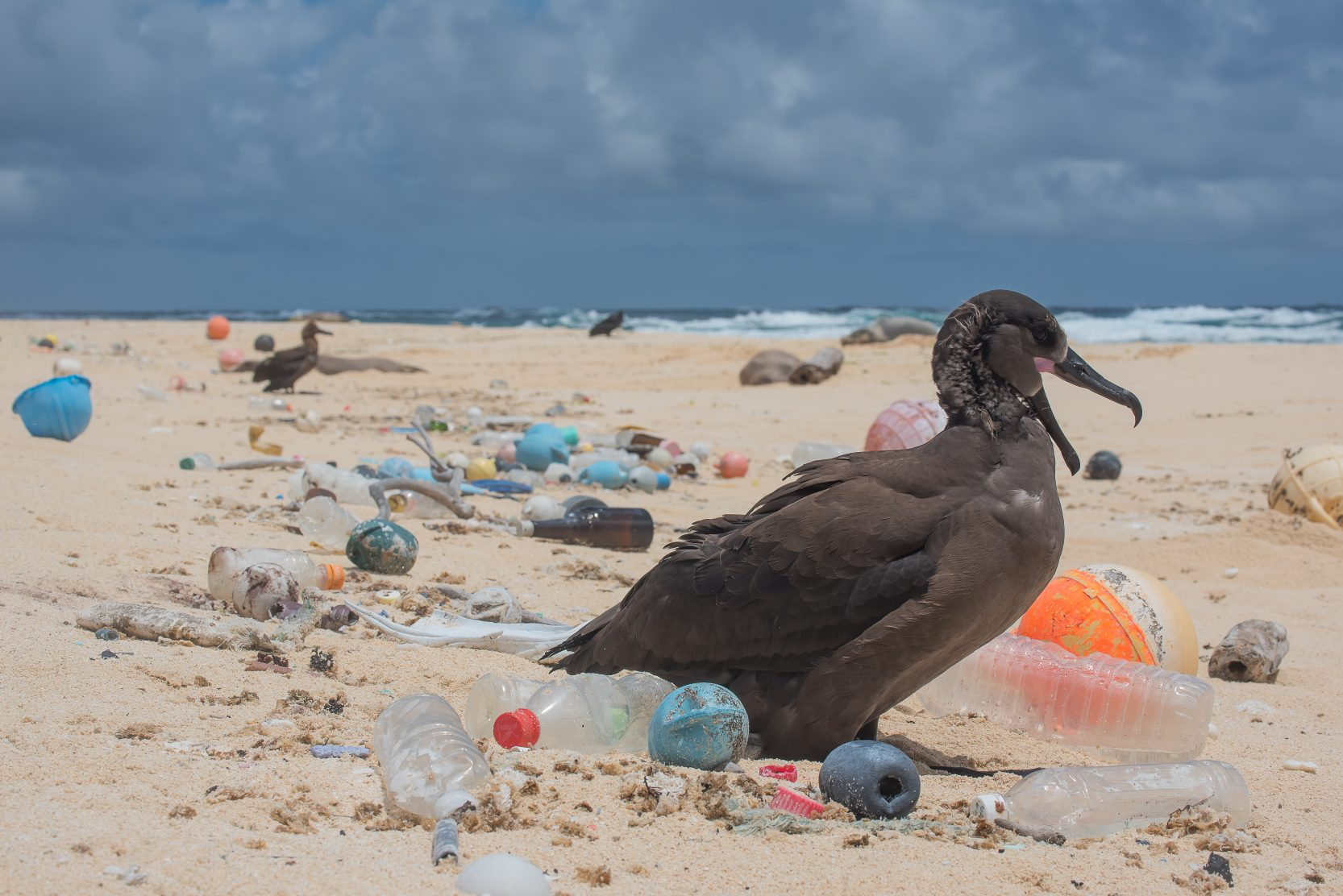 Bird surrounded by plastic photo by Matthew Chauvin e1528207630560