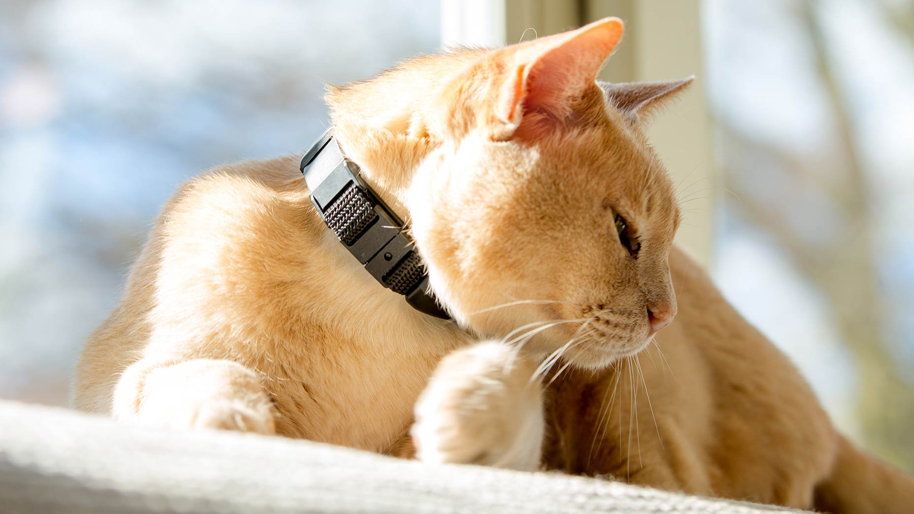 GPS cat tracking collar